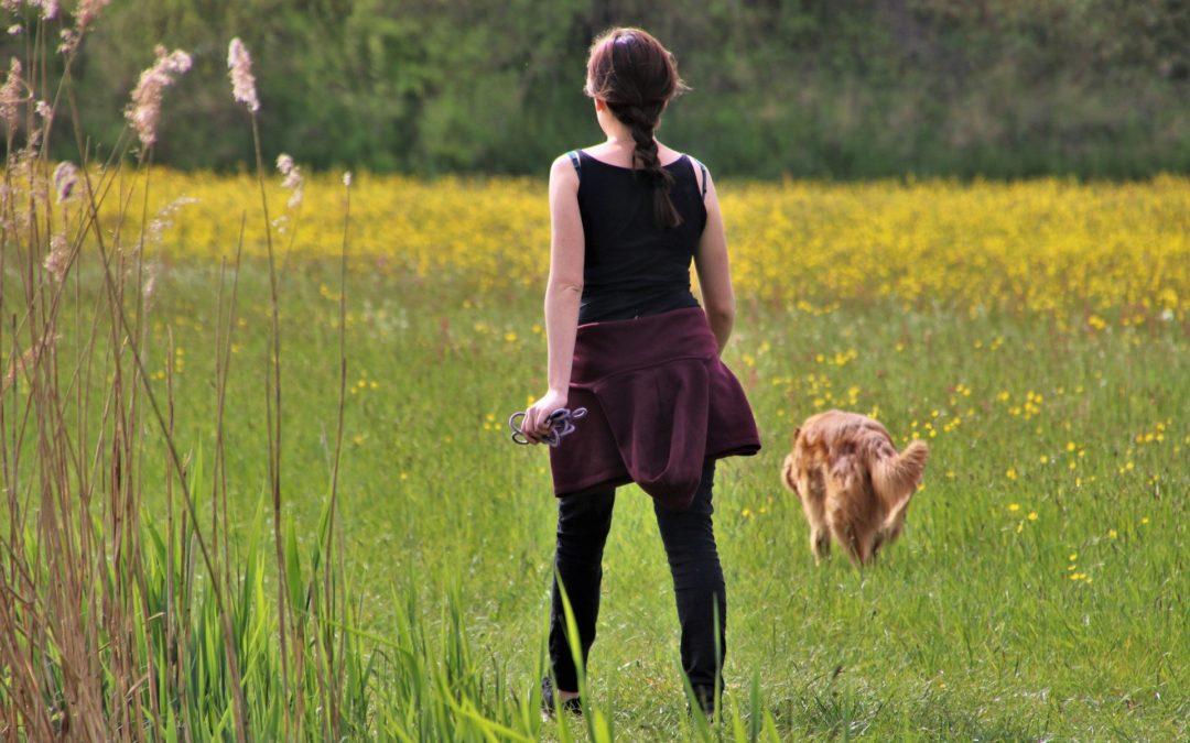 Hundeparasit führt zu Aborten bei Kühen