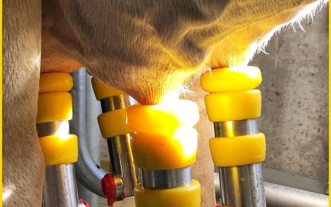 Ein Plädoyer für Ausmelken… MultiLactor macht's möglich