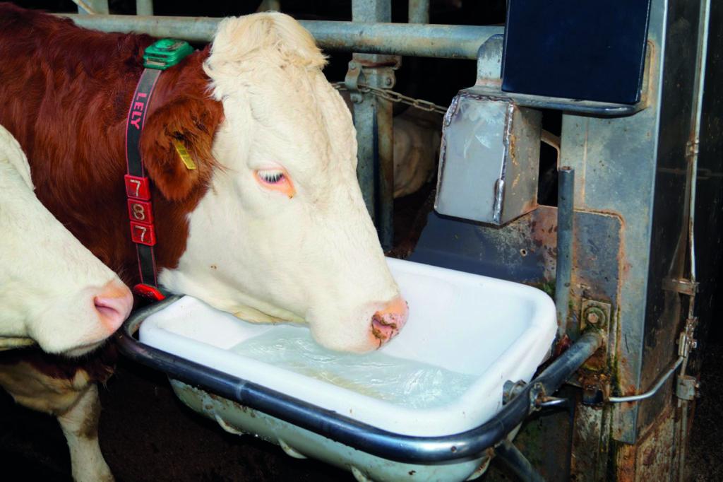 Milchpur Tränke Stall