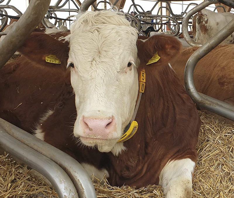 Webinar: Landestag der Milchviehhaltung