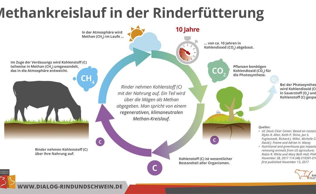 Methanemissionen: Gute Leistungen der Rinder – gut für das Klima