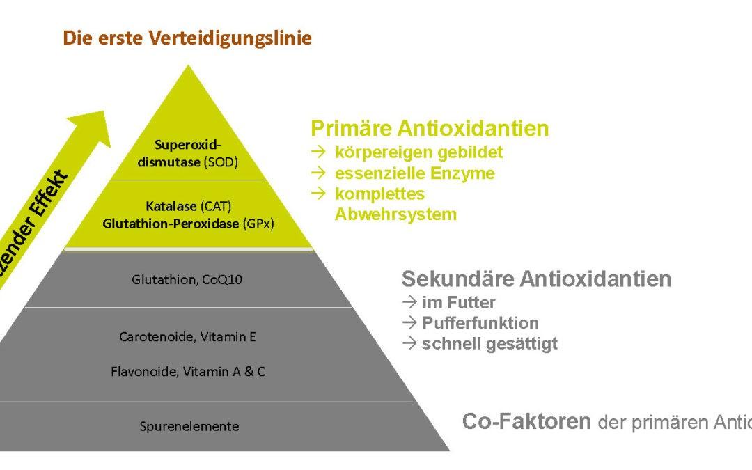 Eine Frage des Immunsystems